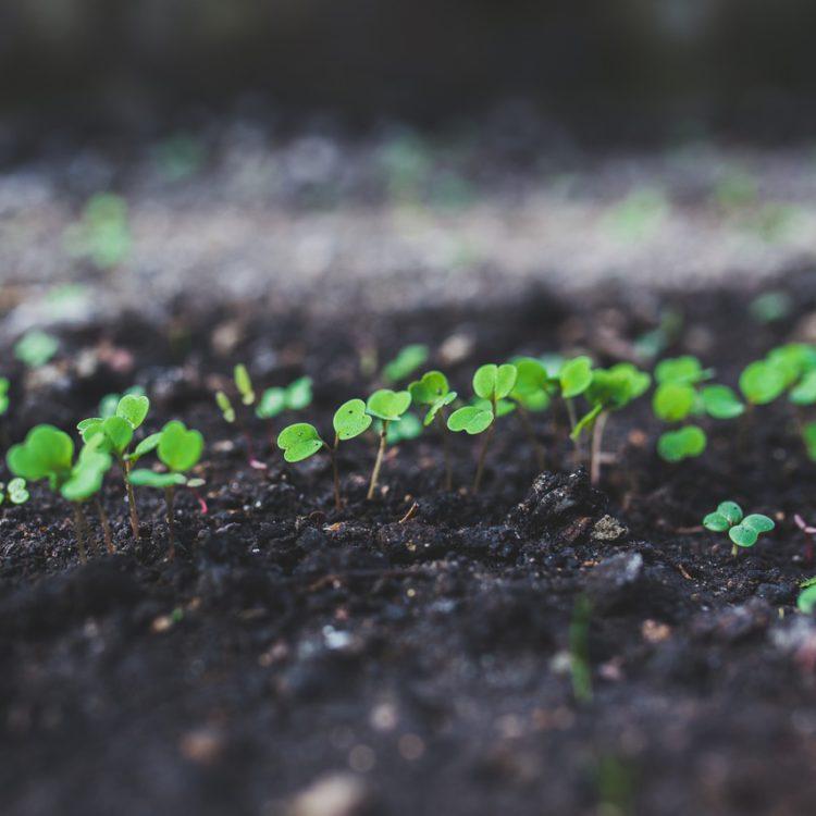 Soil Samples - Understanding your Soil